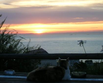 夕陽とまーち