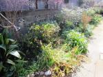 garden0220-1.jpg