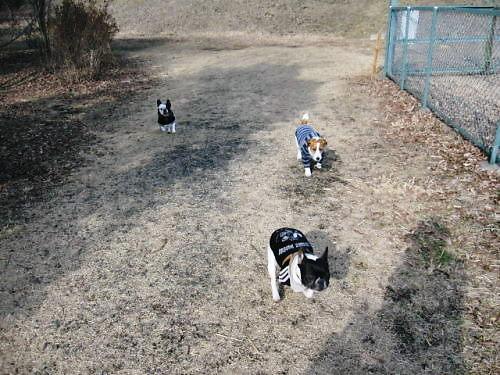 10長岡公園074