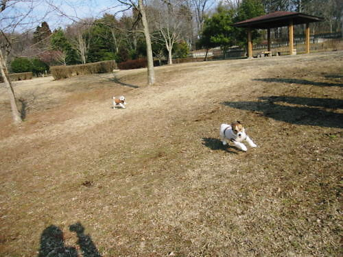 10長岡公園105