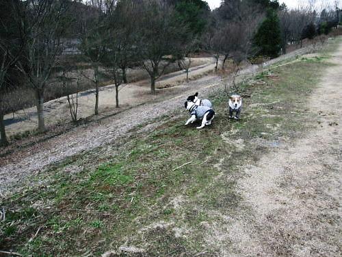 10長岡公園157