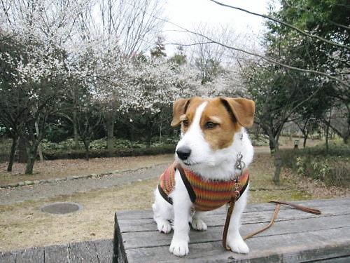 10長岡公園184