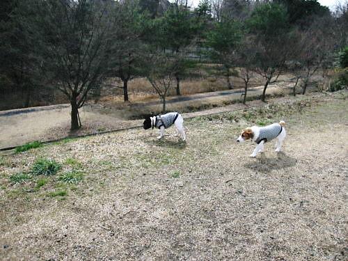 10長岡公園193
