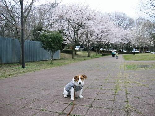 10長岡公園234