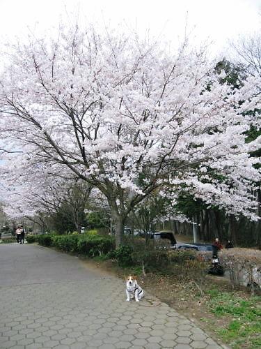 10長岡公園240