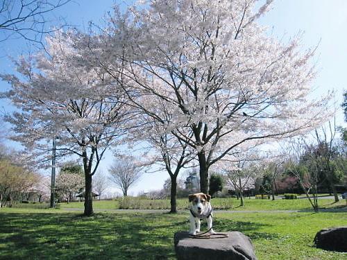 10長岡公園249