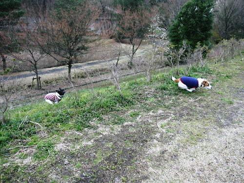 10長岡公園257