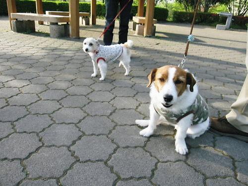10長岡公園311