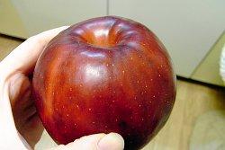 西村しのぶ アルコール リンゴのコンポート