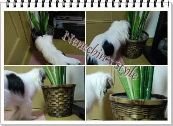 0614e-cats.jpg
