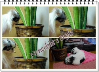 0614f-cats.jpg