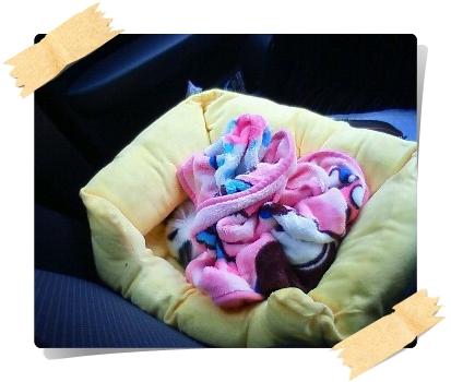 帰りの車内で爆睡中