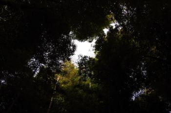 竹林から空を眺める