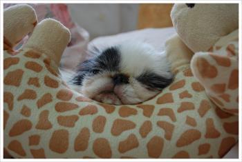 きりんさんの枕3