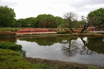 カワセミが居る池