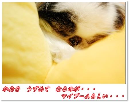 DSC_9513.jpg