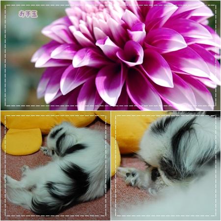 cats0707f.jpg