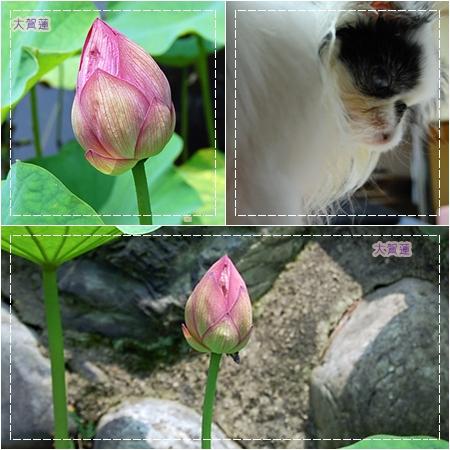 cats0707h.jpg