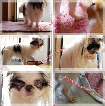 cats080619a.jpg