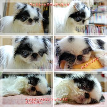 cats080619b.jpg