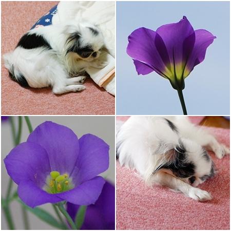 cats080719a.jpg