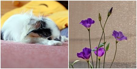 cats080719b.jpg