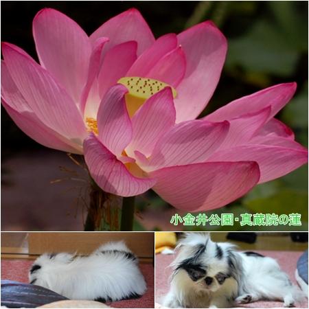cats080727c.jpg