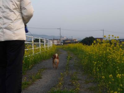 散歩の続き
