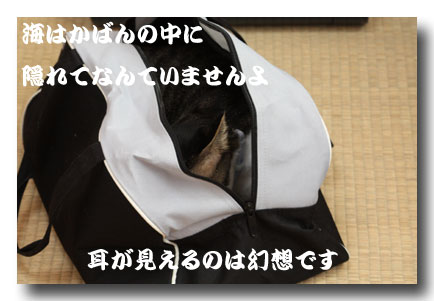 09111101.jpg