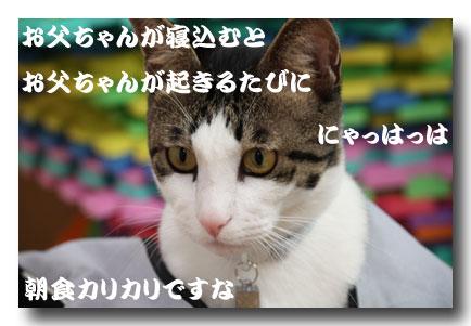 09111104.jpg