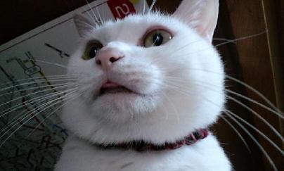 舌チョロ小
