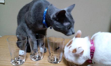 猫グラス1S