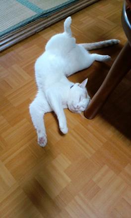 ぺる寝てる!
