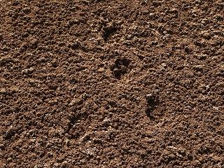野兎の足跡・ズーム