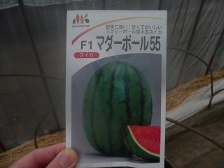 マダーボール55