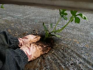 土を寄せる