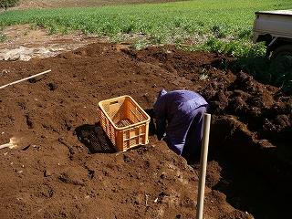 埋めたセレベスを穴から出す・1