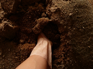 ボカシ肥料に手をつっこむ