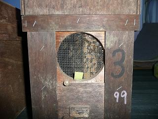 巣箱内にいる蜂