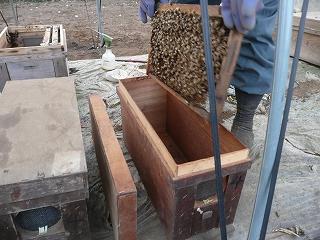 巣板を小さい巣箱へ・1