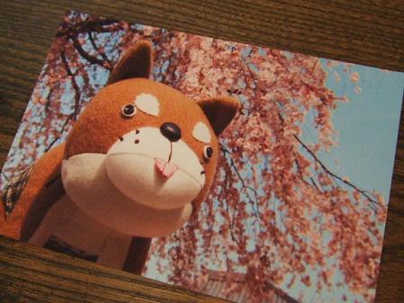 postcard.sakura.jpg