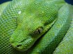 (一財)日本蛇族学術研究所