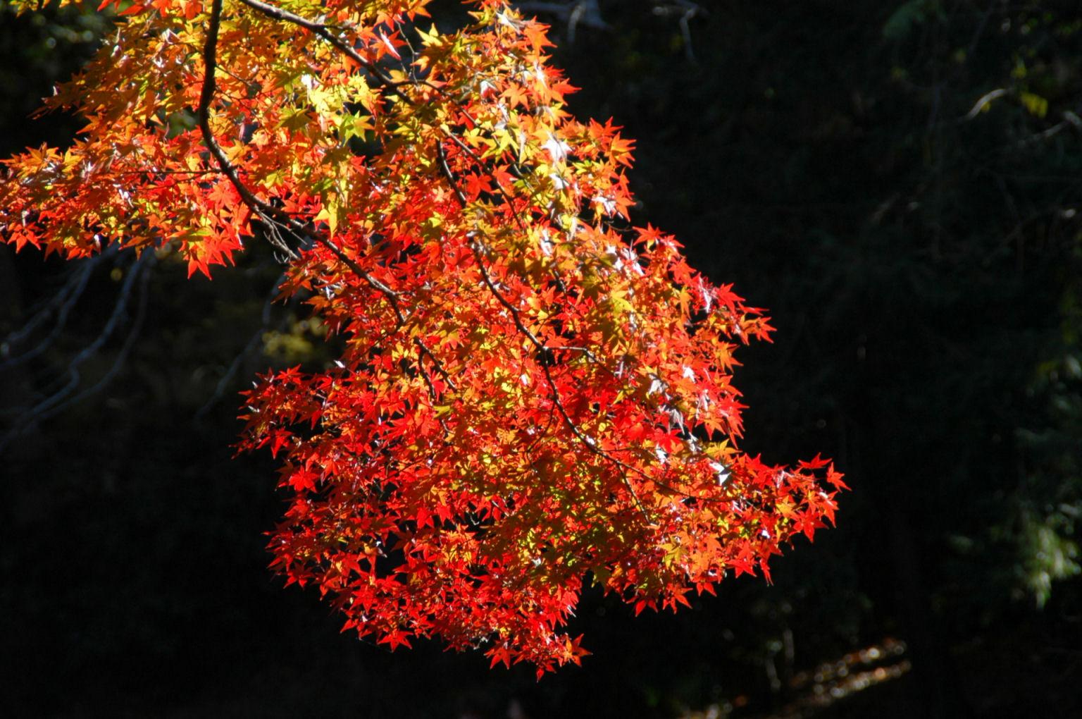 inokashira0137.jpg