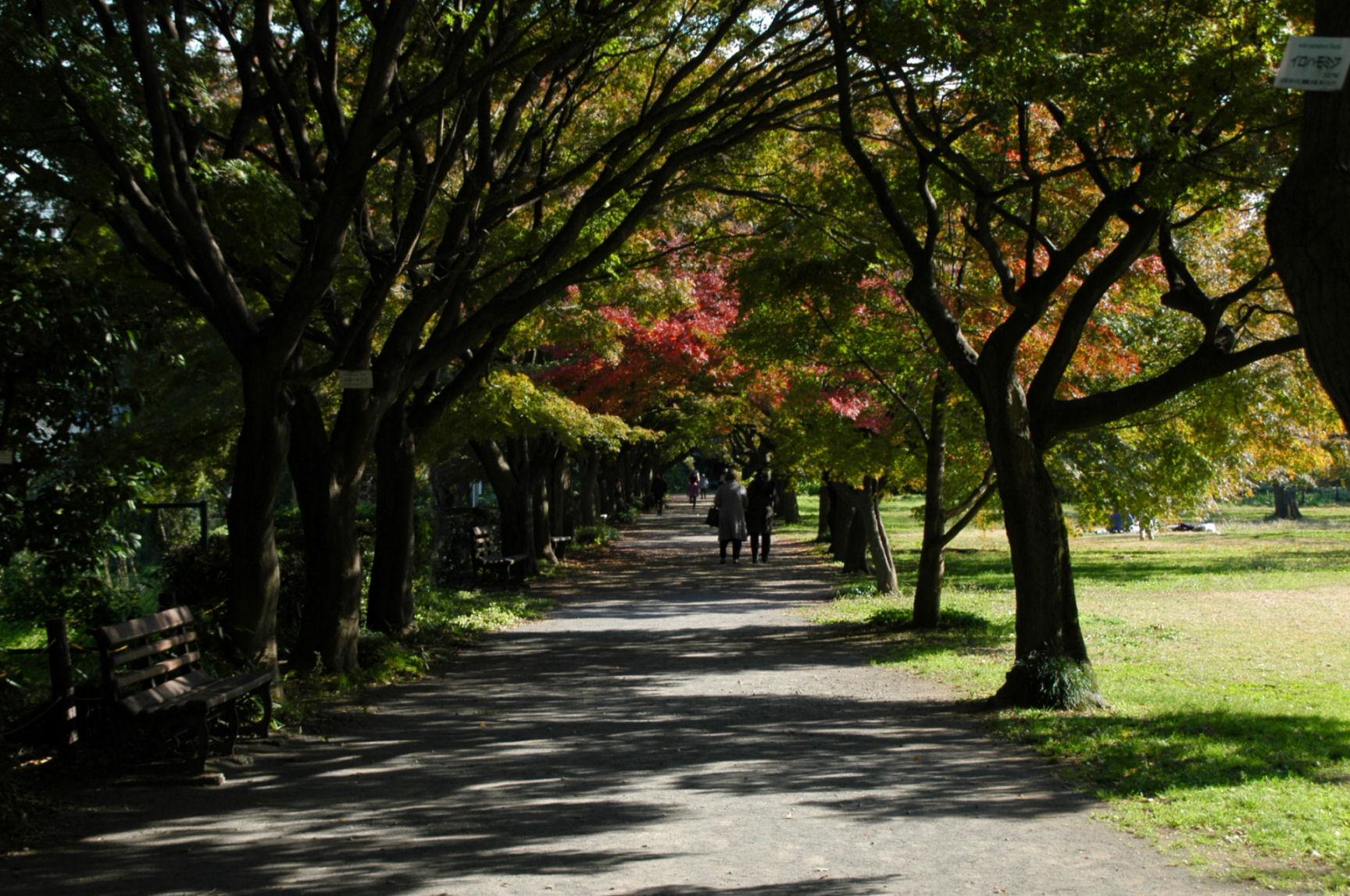 koishikawaa0185.jpg