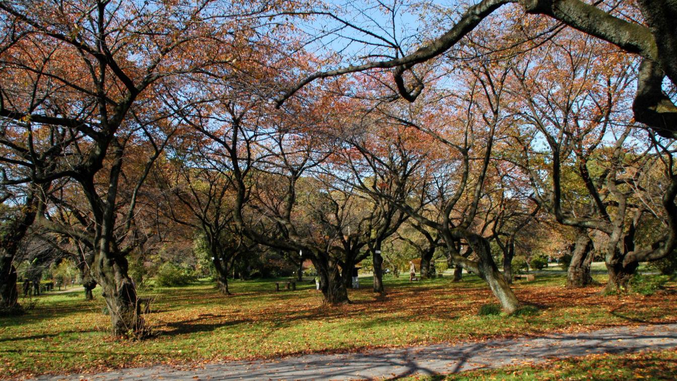 koishikawab0166.jpg