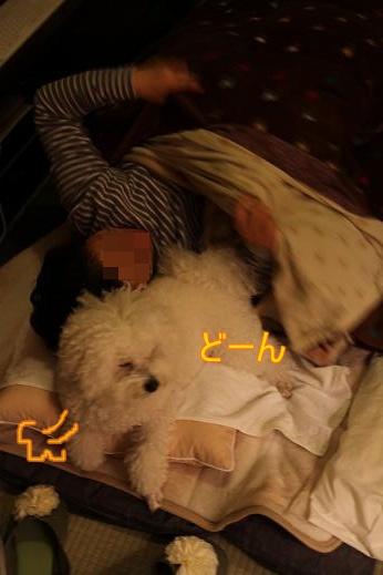 犬達が選んだ寝床 (4)