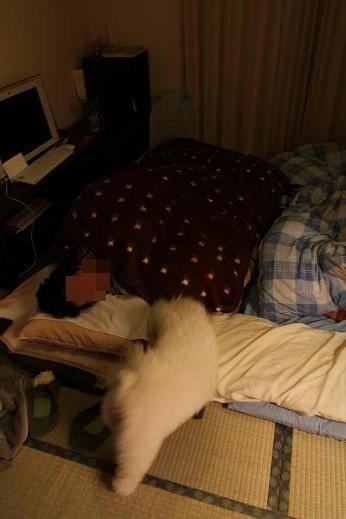犬達が選んだ寝床 (5)
