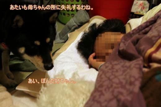 犬達が選んだ寝床 (2)