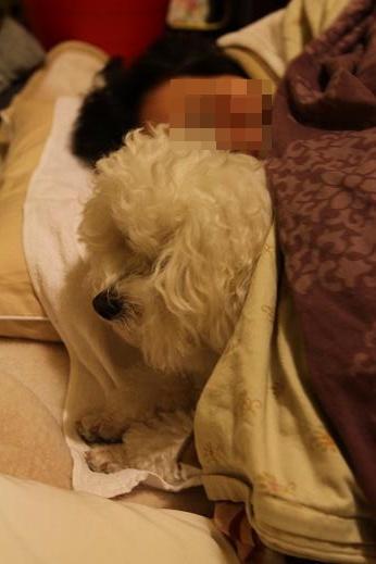 犬達が選んだ寝床 (3)