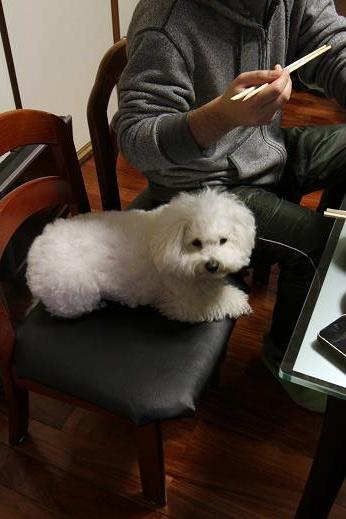 食卓と犬 (3)